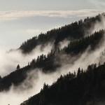 Svenskt flyg kan flygas på skogsrester enligt forskare