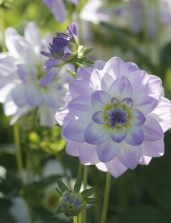 Blumenfreude10