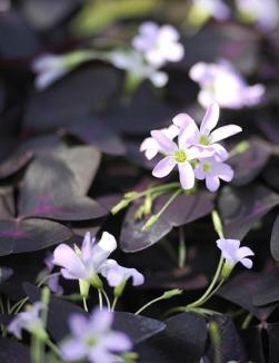 Blumenfreude11