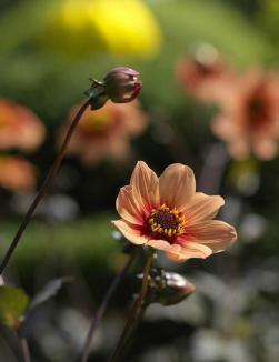 Blumenfreude14