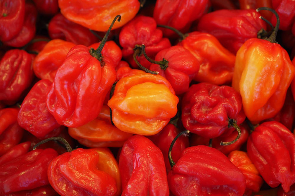 Image result for habaneros