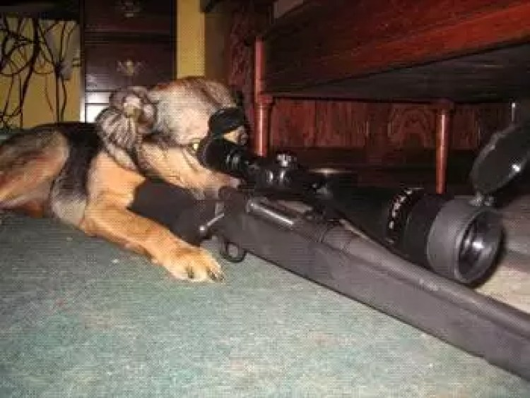 dogs, canine companions, dogs of war,