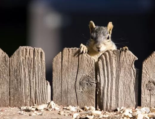 Squirrel Special forces Foreign Internal Defense