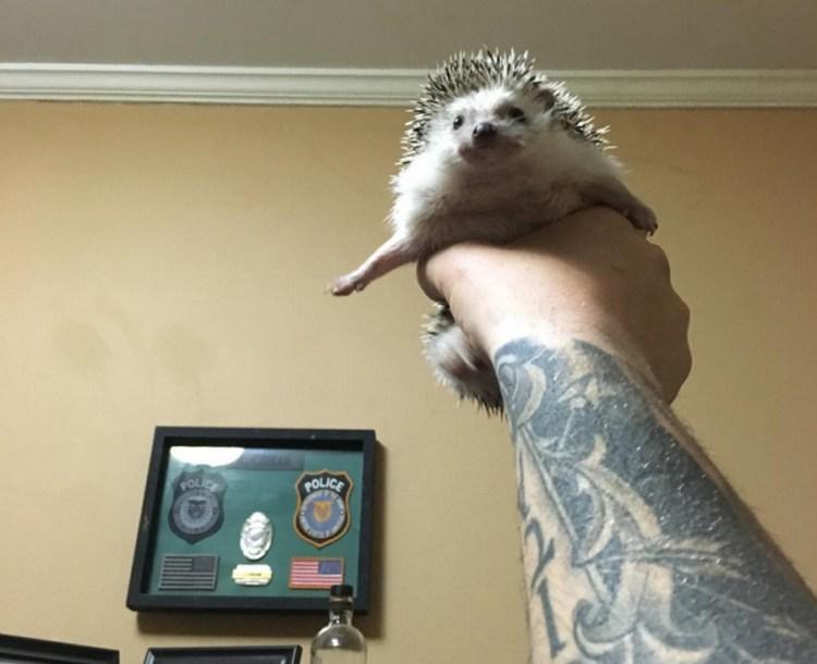 Sage Dynamics Official Hedgehog Mascot