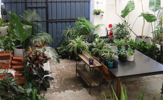 Breakfast, Coffee and SO MANY PLANTS at this Fremantle Cafe