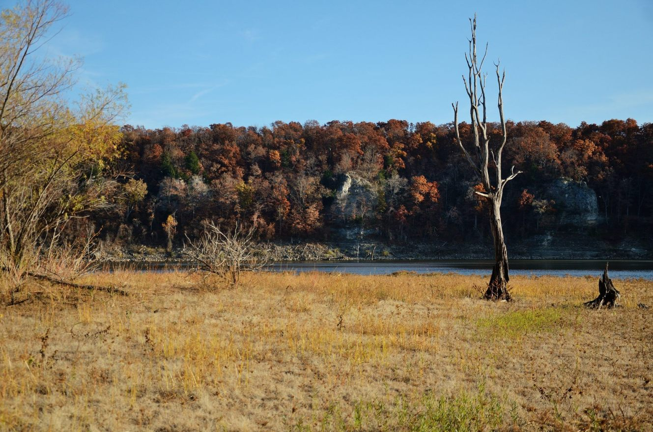 Bluffs and dead tree, Bucksaw. Copyright © 2011 Gary Allman, all rights reserved.