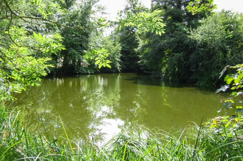 One of three ponds at the school. V
