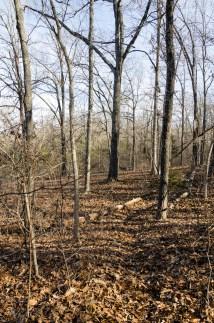 Spot the trail
