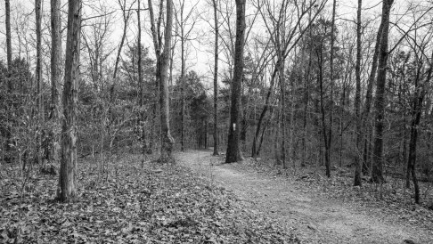 Busiek Red / Yellow Trail