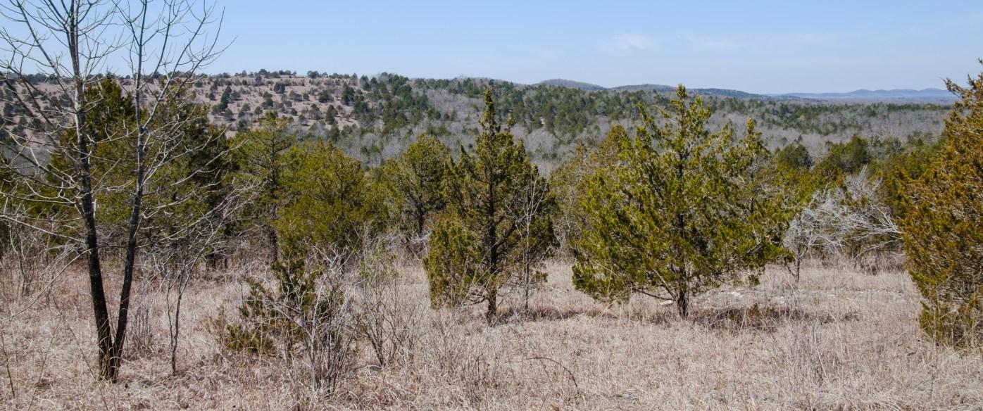 Looking west across the hollow where Brushy Creek runs.