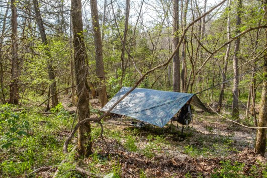 Dutchware Chameleon Hammock set up at around 24' between trees. I had fun getting the suspension high enough for the span. Copyright © 2018 Gary Allman, all rights reserved.