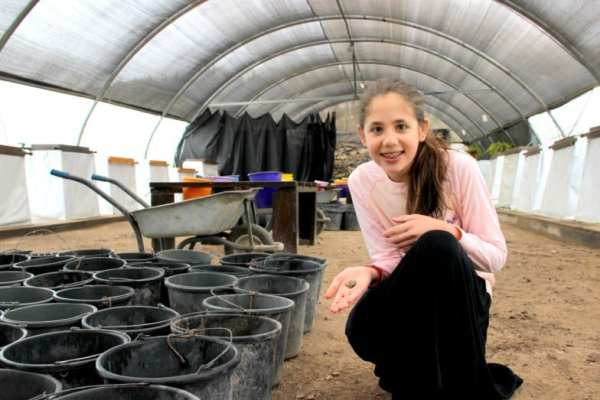 12 year old Neshama Spielman at the Temple Mount Sifting Project where she discovered the 3,200 year old ancient Egyptian amulet. (Photo: City of David / Temple Mount Sifting Project / Adina Graham)