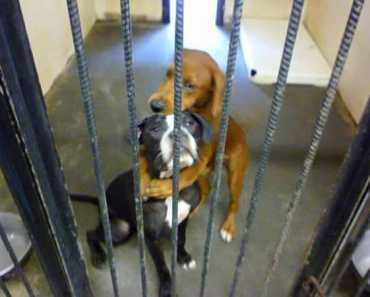 """Hugging Dogs"" Photo Helps Two Pups Escape Euthanization And Find A Home"