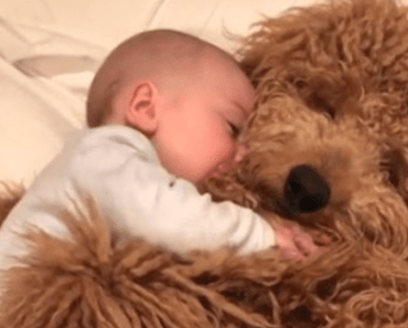 Video Of A Baby Cuddling Adorable Dog Goes Viral