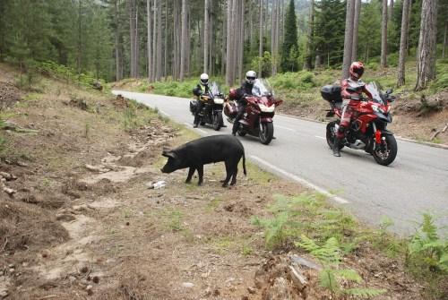 Schwein gehabt Motorradfahren