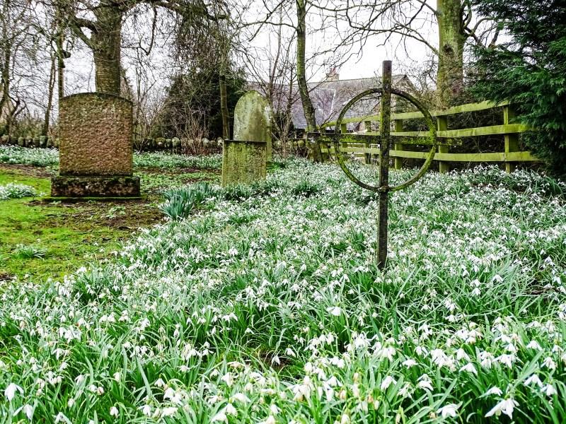 Ingram churchyard with snowdrops