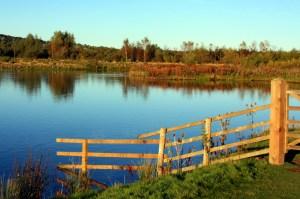 Blue skies at Branton Lake