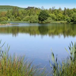 Explore Branton Nature Conservation Area in the Breamish Valley