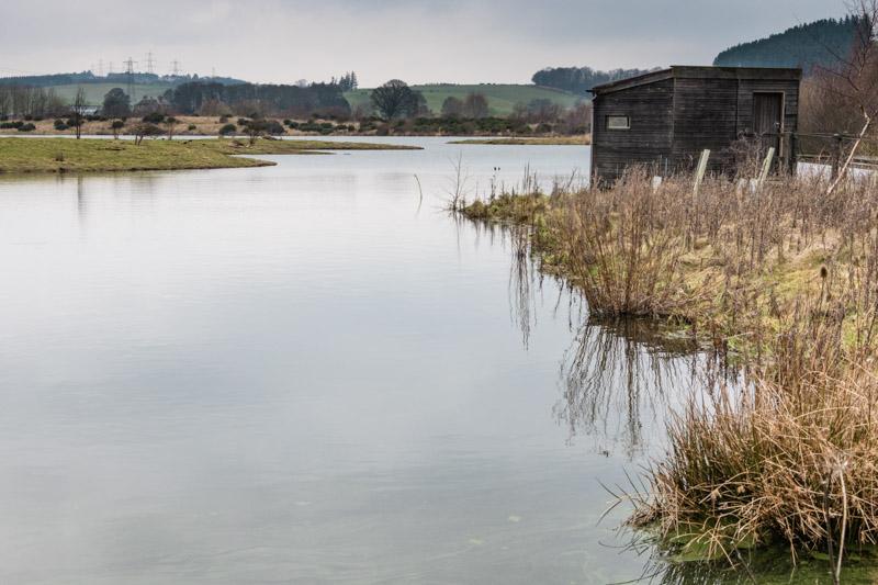 Branton Lakes grey day walk bird hide