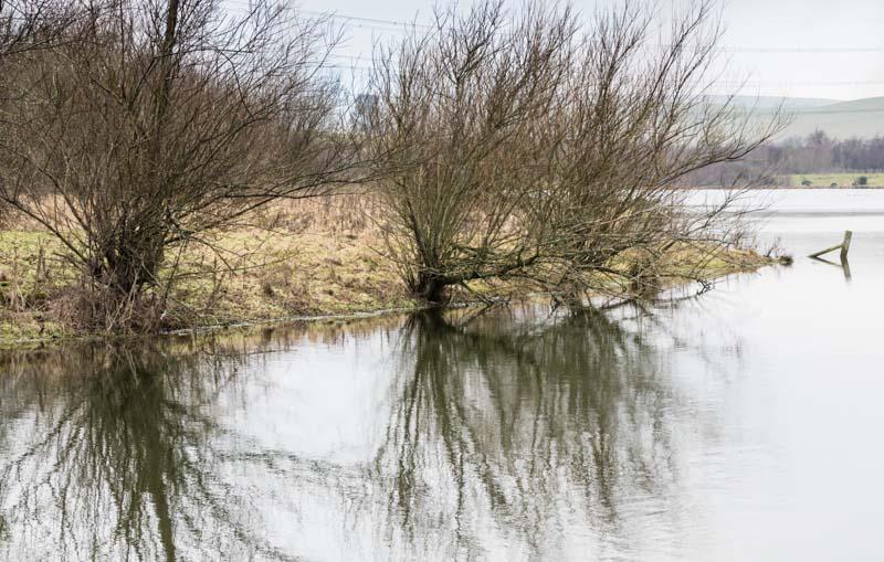 Branton Lakes grey day walk reflection