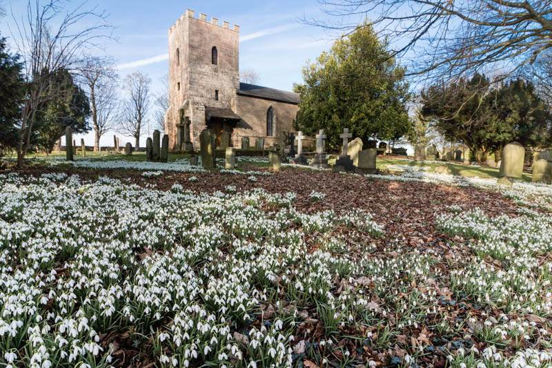 Ilderton church snowdrops