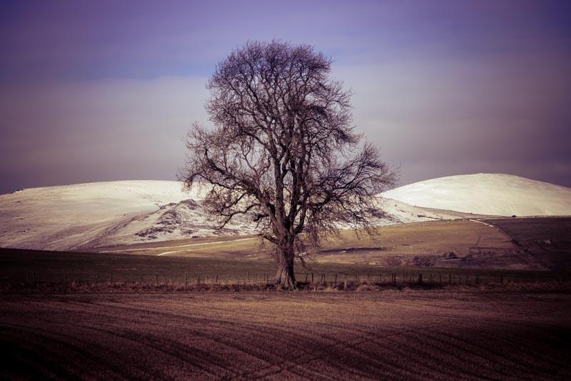 oak tree at Branton (3P8A7042) c. Graham Williamson 2018