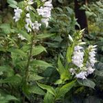 Crawley Dene flowers in August
