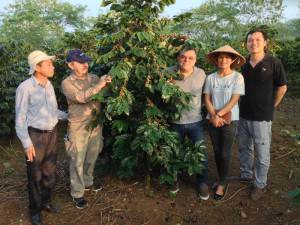 The Catimor Coffee tree a local species-has been chosen to collect control samples