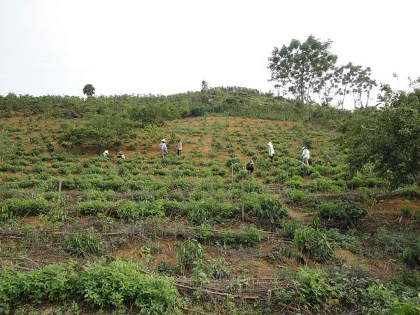 ission in son La and Dien Bien Phu (Vietnam) Breedcafs