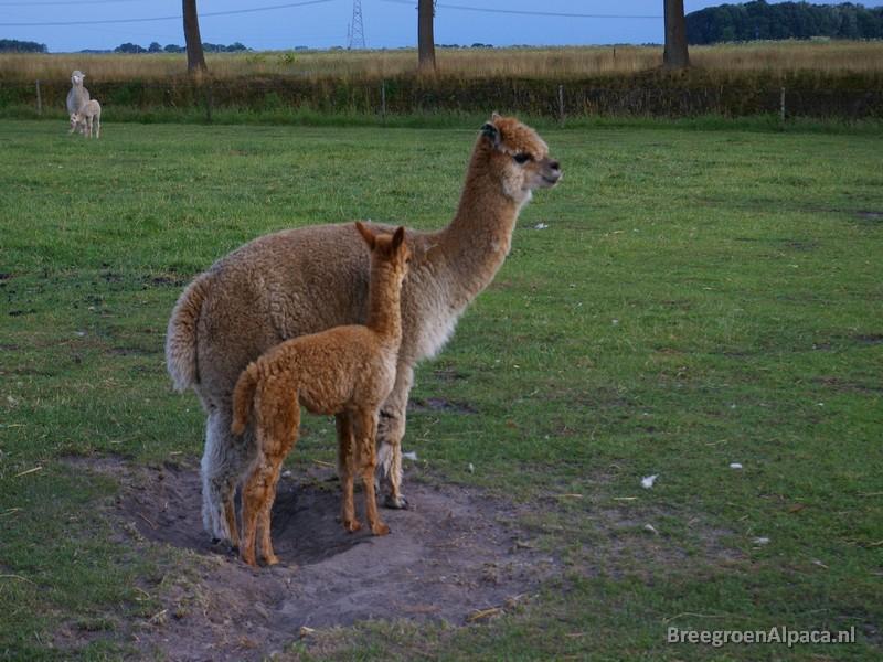 'Mam, waarom moeten we zo vaak precies hier gaan staan?'