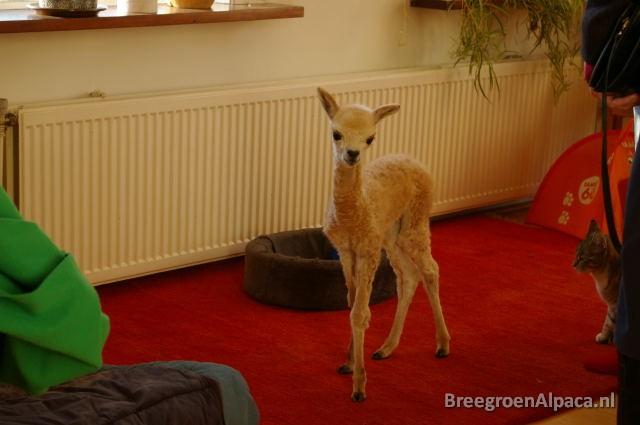 'Wie zei hier iets over Bambi?'