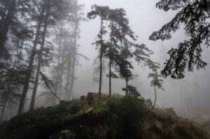 nebbia nel bosco (1 von 1)