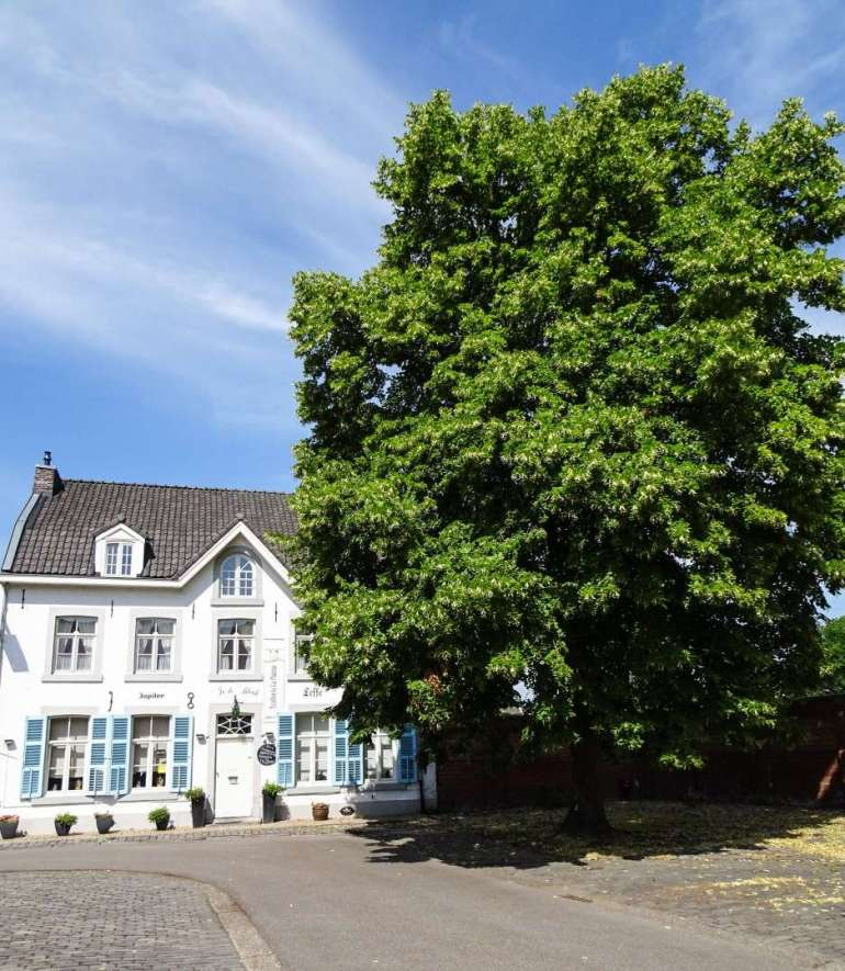 Oud Rekem Limburg Rivierpark Maasvallei Bregblogt.nl