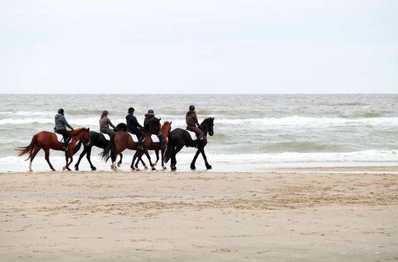 Ik was een paardenmeisje bregblogt.nl Shutterstock