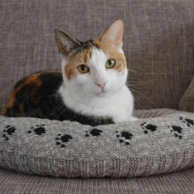 Breipatroon kattenmand