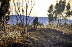 Morgenspaziergang Wilderness Lodge | Grampians |Reiseblog BREITENGRAD53