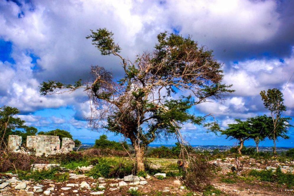 Urlaub auf Antigua - Martin Cyris-6