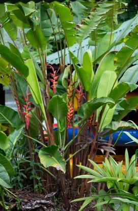 Costa Rica - Tortuguero Nationalpark - Mawamba Lodge Flora