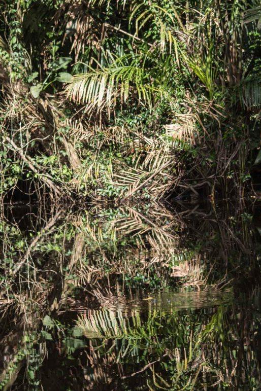 Costa Rica - Tortuguero Nationalpark - Wasserspiegelung