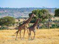 kenia-liane-ehlers-safari-in-kenia-015
