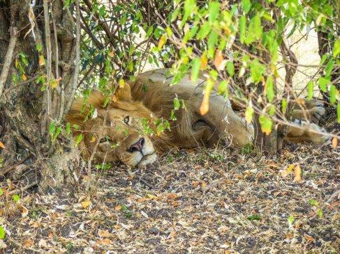kenia-liane-ehlers-safari-in-kenia-030