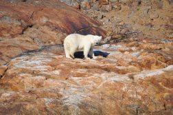 Abenteuer-Arktis-Elisabeth-Konstantinidis-Reiseblog-Breitengrad53-SC_0548