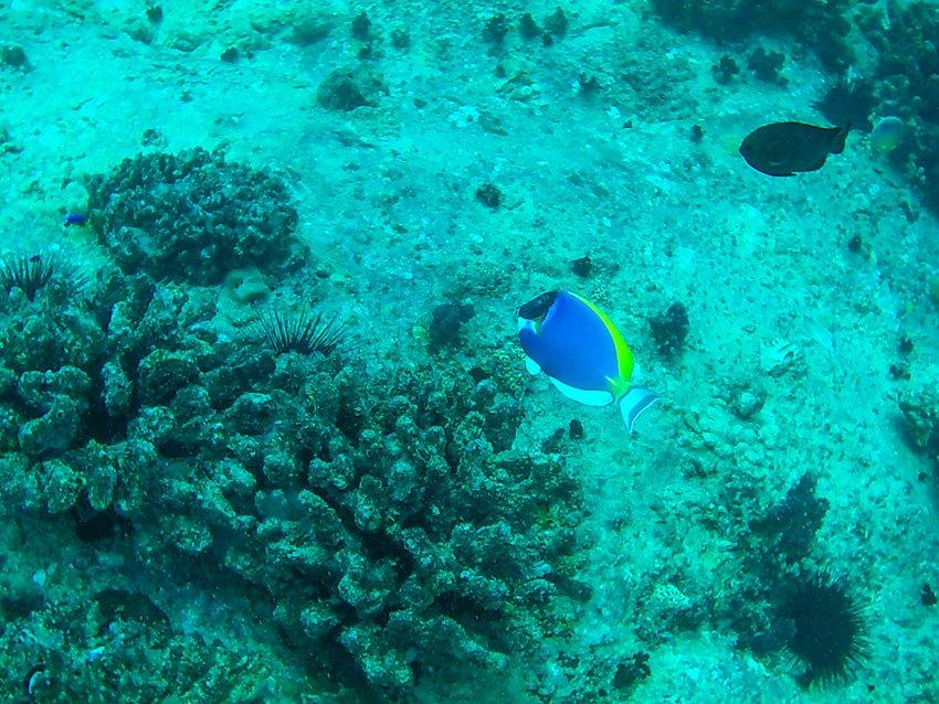 Urlaub Seychellen - Beste Reisezeit Seychellen - Joerg Baldin-092015