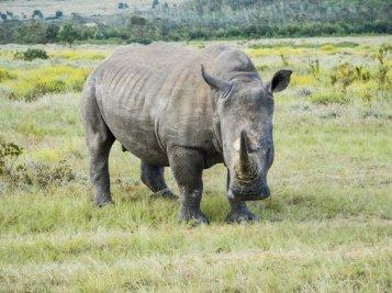 DSC05125 - Urlaub in Suedafrika - Eva Mayring