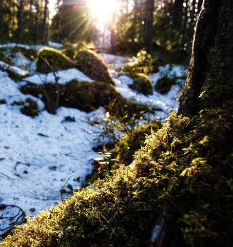 2018 Schweden Smaland Zipline breitengrad53 Wandern 5