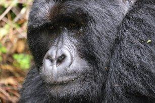 Uganda-Gorillas-Breitengrad53-Reiseblog-Jutta-Lemcke-SCF6110_korr1