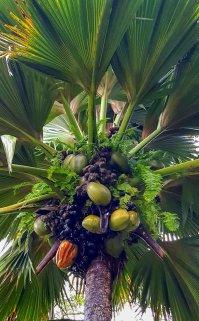 16a Liane-Ehlers-Costa Mediterranea Indischer Ozean-Breitengrad53-Reiseblog