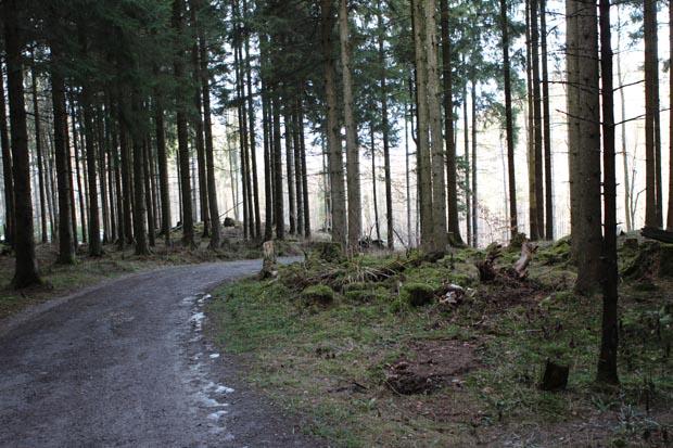 Auch die Streckenabschnitte im Wald lohnen sich