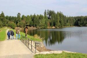 Der Bärenbrucher Teich am Harzer Hexenstieg im Harz