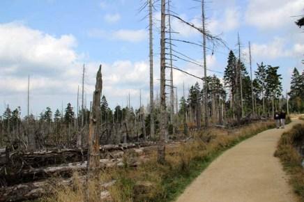 Ein durch den Borkenkäfer abgestorbener Wald